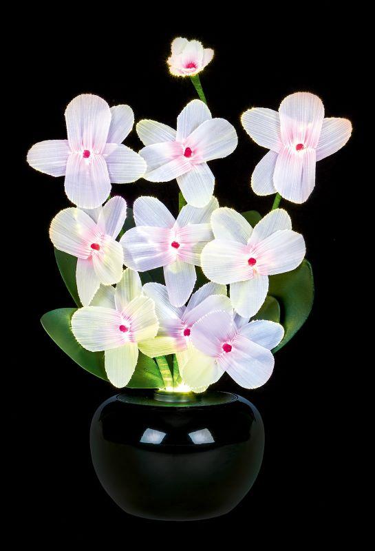 Fibre Optic Flowers Orchid Light Display