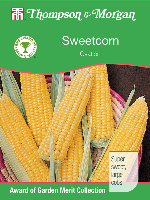 Sweetcorn Ovation F1