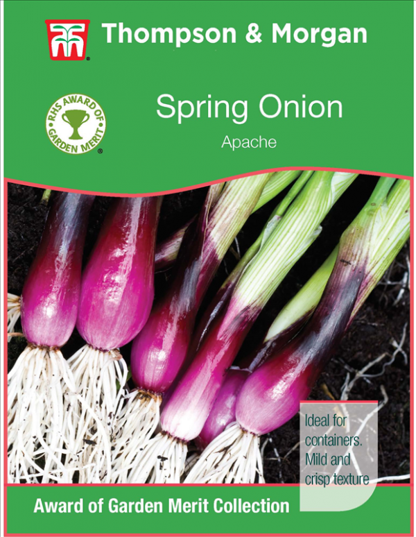 Onion Salad Apache