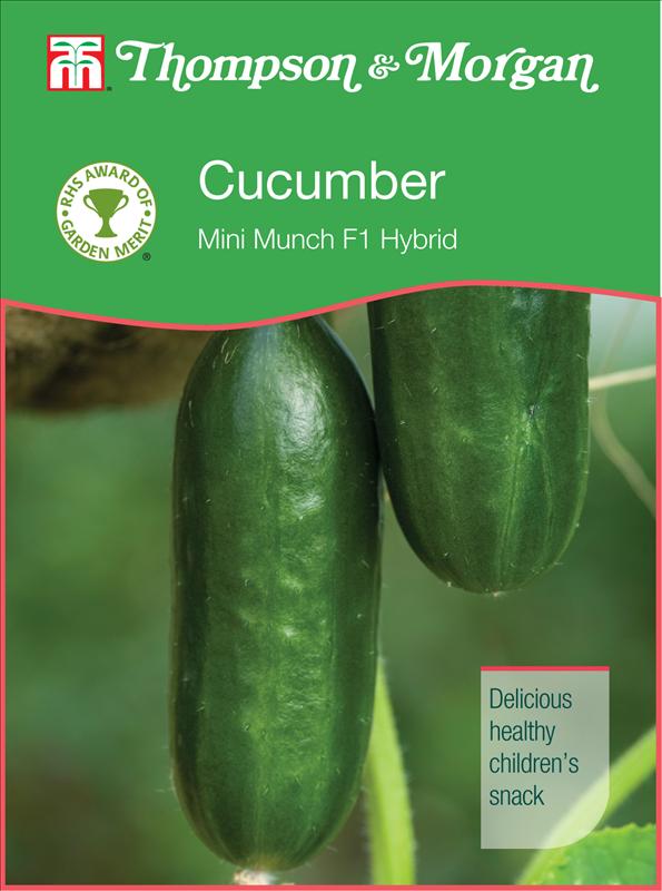Cucumber Mini Munch