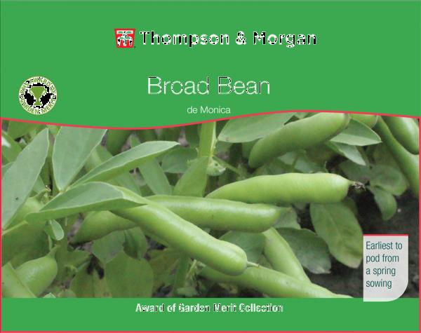 Broad Bean de Monica.