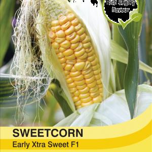 Sweetcorn Early Xtra Sweet F1