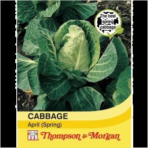 Cabbage (Spring) April