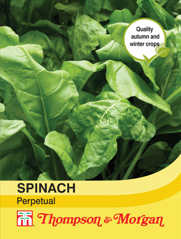 Spinach Perpetual