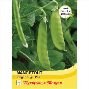 Mangetout Oregon Sugar Pod