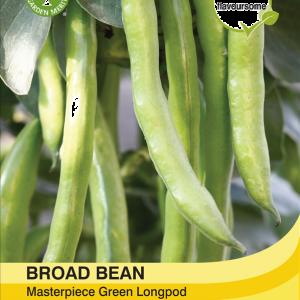 Broad Bean Green Longpod