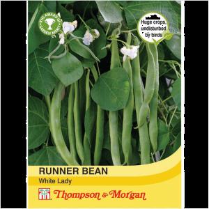 Runner Bean White Lady