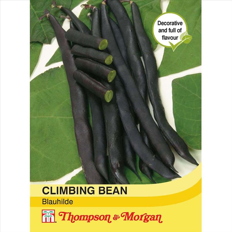 Climbing Bean Blauhilde