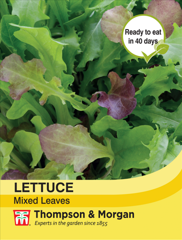 Lettuce Leaves Mixed