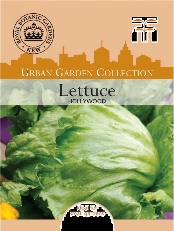 Lettuce Hollywood