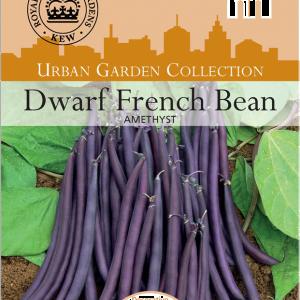 Bean Dwarf Amethyst
