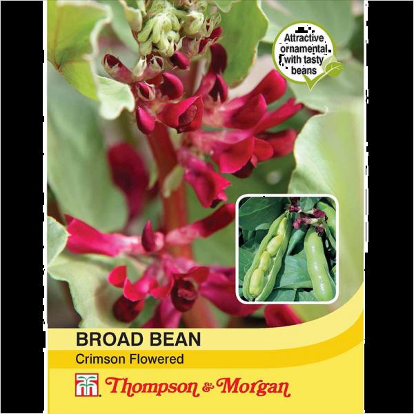 Broad Bean Crimson