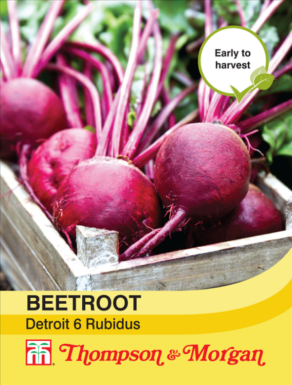 Beetroot Detroit 6 Rubidus