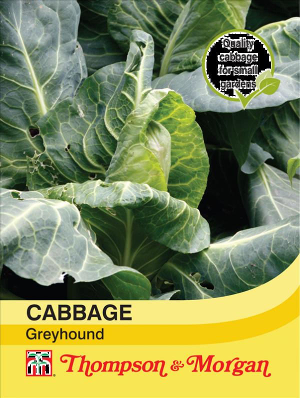 Cabbage Greyhound