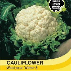 Cauliflower Walcheren Winter 5