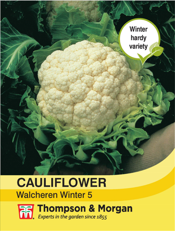 Cauliflower Walcheren Winter 5