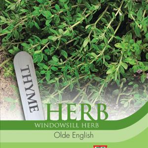 Herb Thyme Olde English