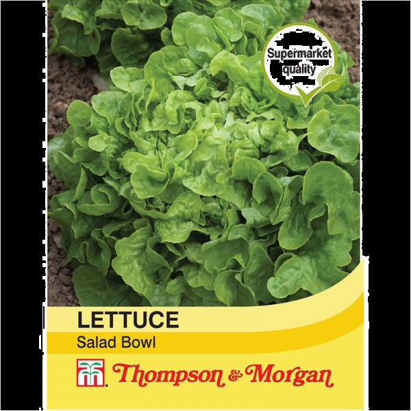 Lettuce Salad Bowl