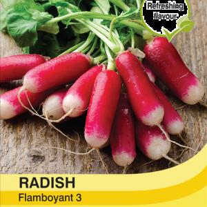 Radish Flamboyant 3