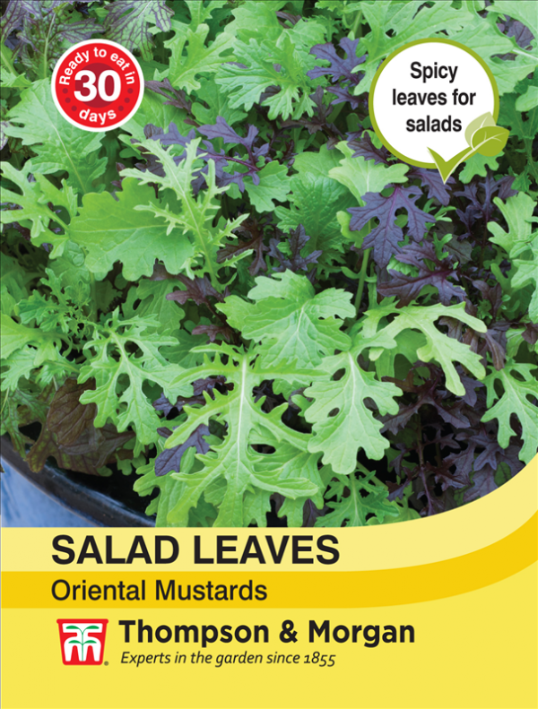 Salad Leaves - Oriental