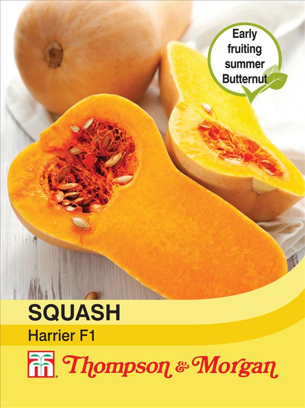 Squash Harrier F1