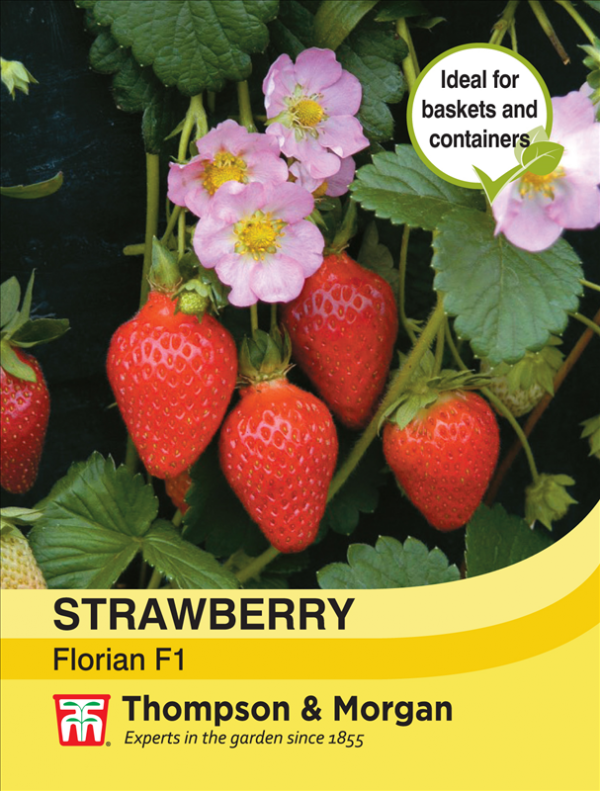 Strawberry Florian F1