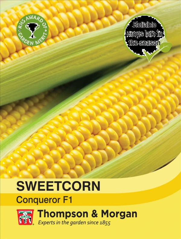 Sweetcorn Conqueror F1