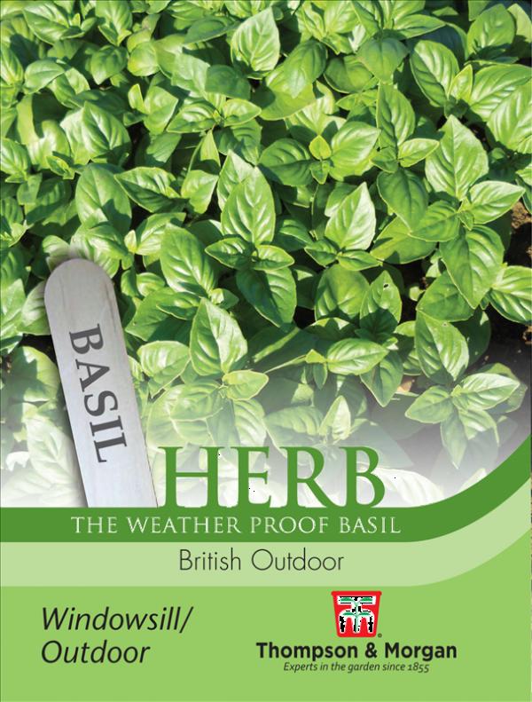 Herb Basil British Outdoor