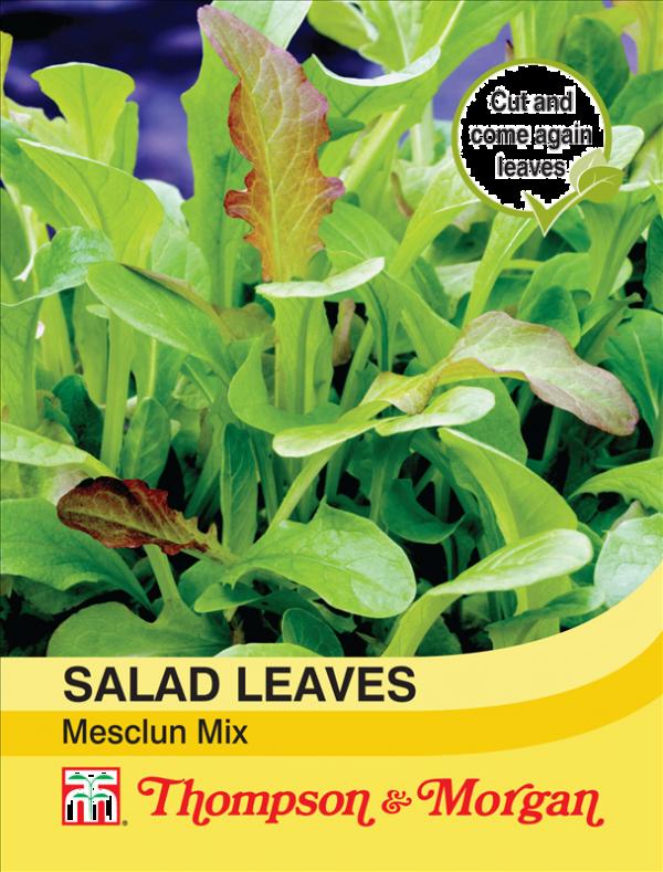 Salad Leaves - Mesclun