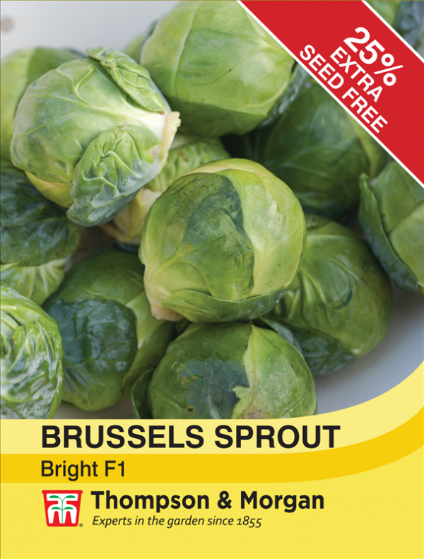 Brussels Sprout Bright F1