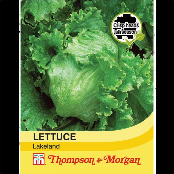 Lettuce Lakeland