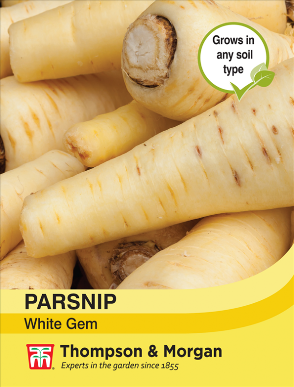 Parsnip White Gem
