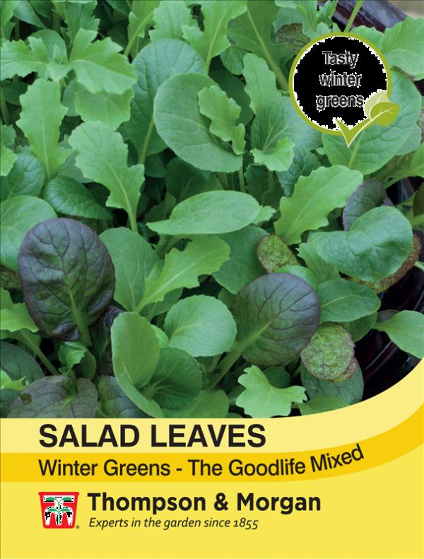 Salad Leaves - Winter Greens