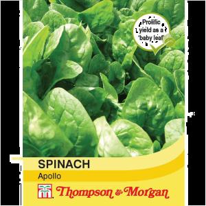 Spinach Apollo