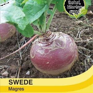 Swede Magres