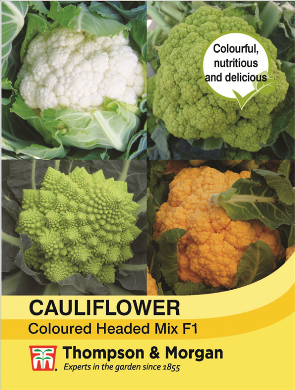 Cauliflower Coloured Mix F1