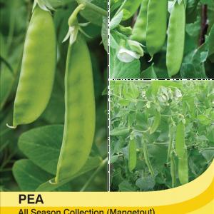 Mangetout Pea Mix