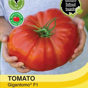 Tomato Gigantomo F1