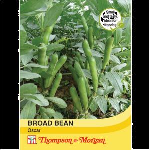 Broad Bean Oscar
