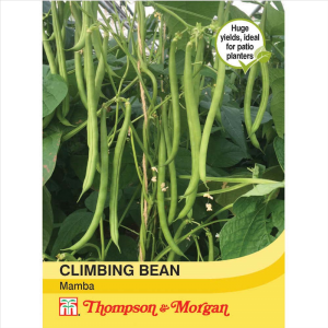 Climbing Bean Mamba