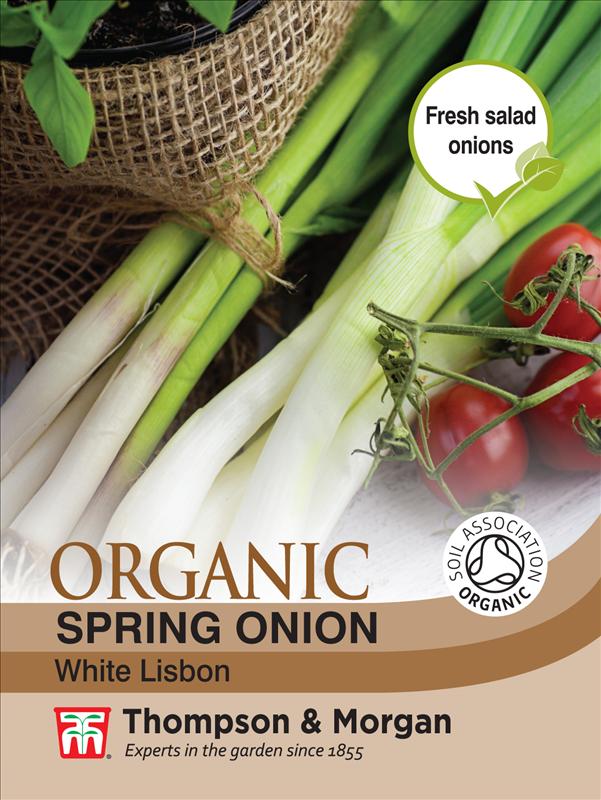 Spring Onion White Lisbon Org