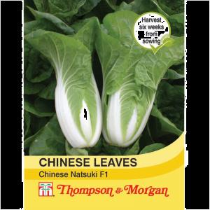 Cabbage chinese Natsuki F1
