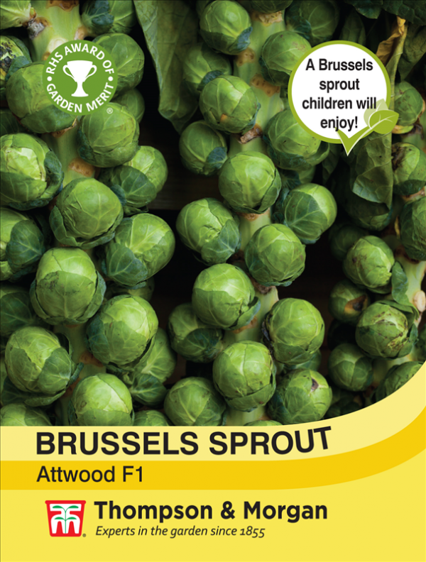 Brussels sprout Attwood