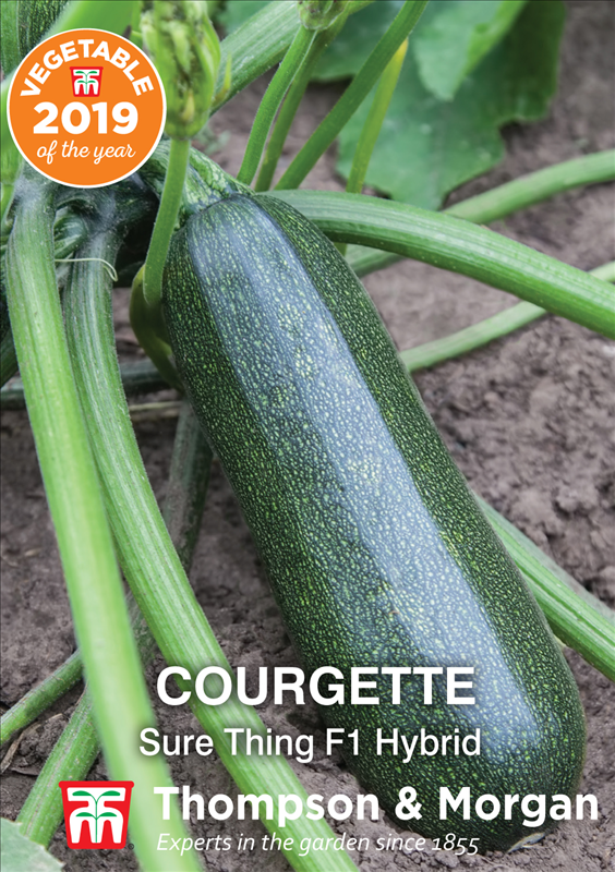 Courgette Sure Thing