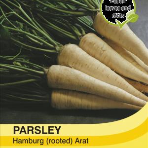 Parsley Hamburg arat