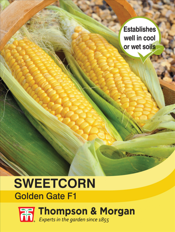 Sweetcorn Golden Gate