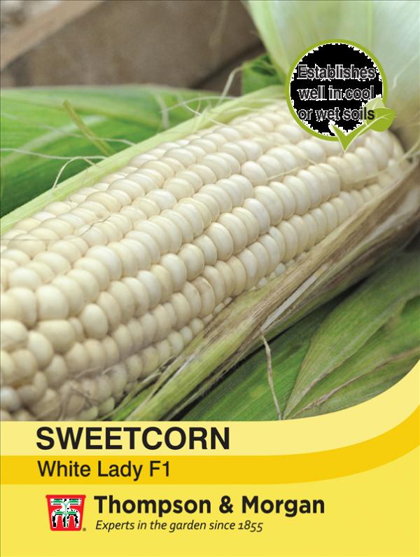 Sweetcorn White Lady