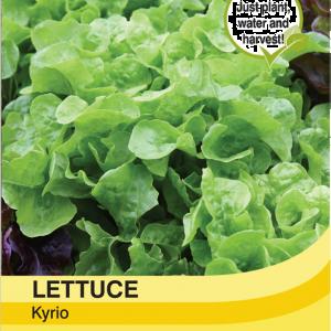 Lettuce Kyrio