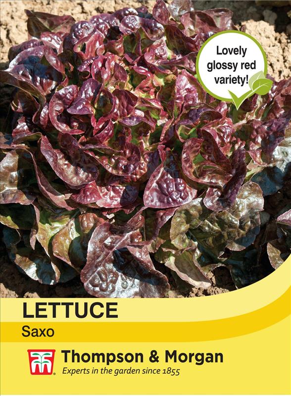 Lettuce Saxo