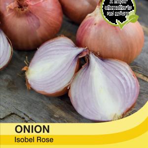 Onion Isobel Rose